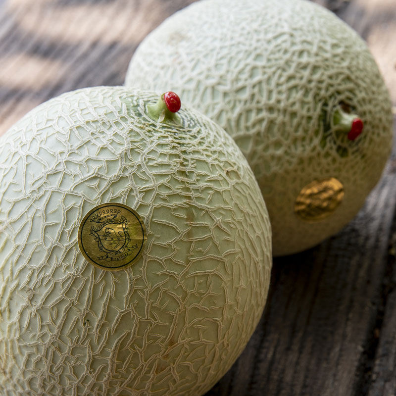 The fruits of Count Guarienti: melons.